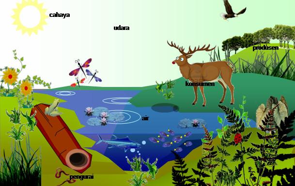 Pengertian Ekosistem Beserta Komponen Dan Contoh